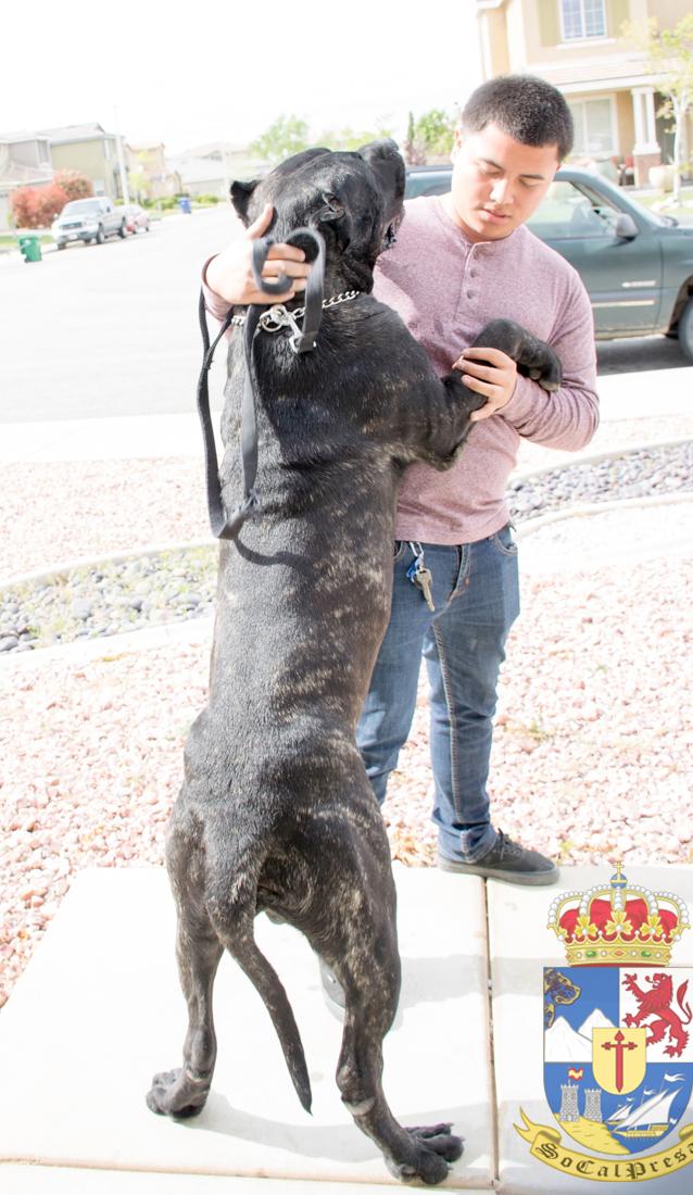 Socal Dog Adoption